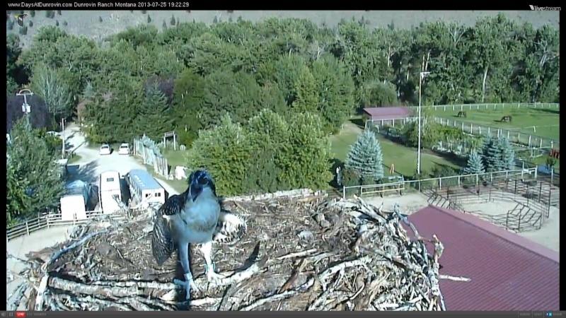 Dunrovin Ospreys - Page 2 Mmbbbc13