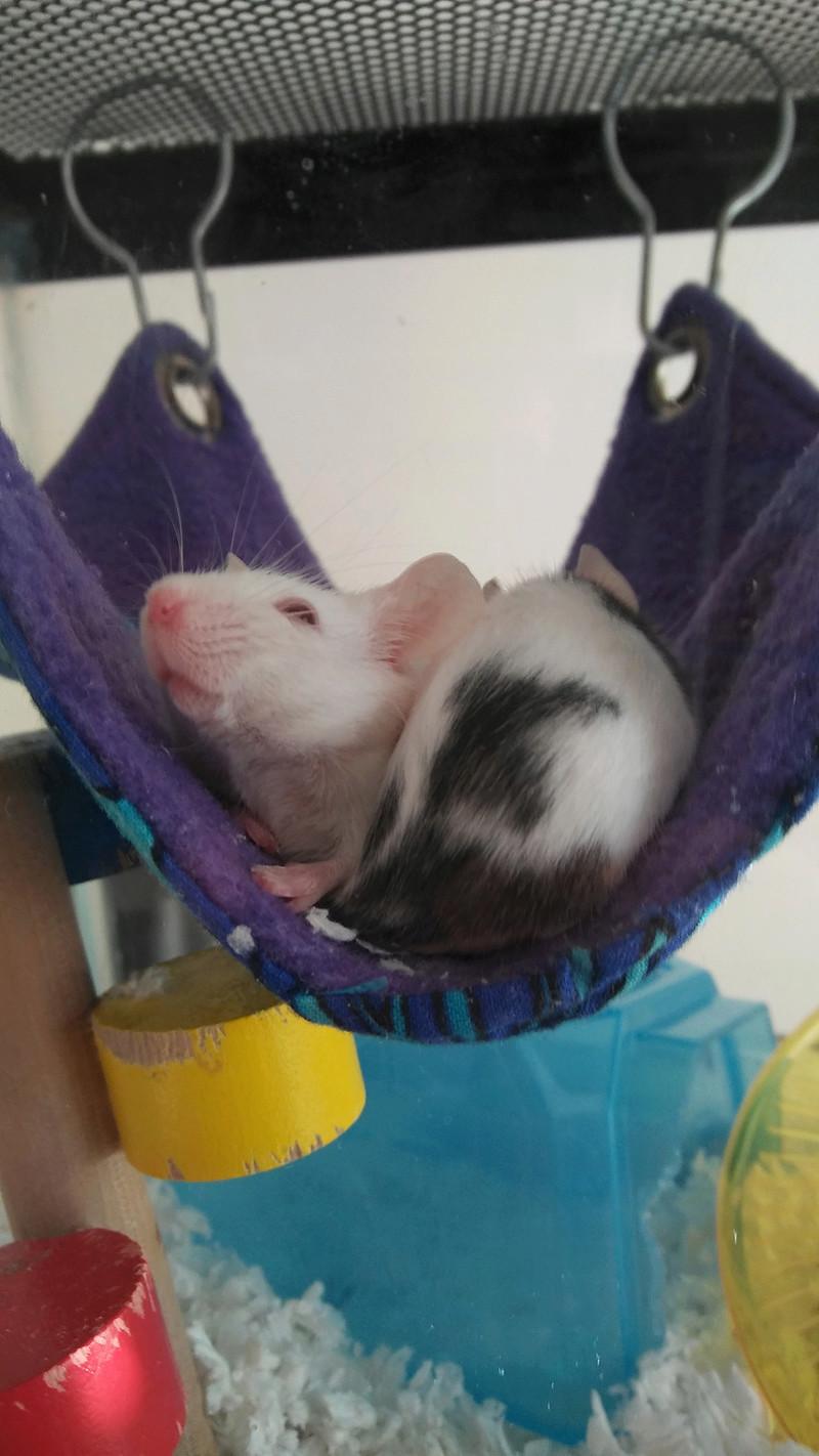 Silly Sleeping Mice 20160812