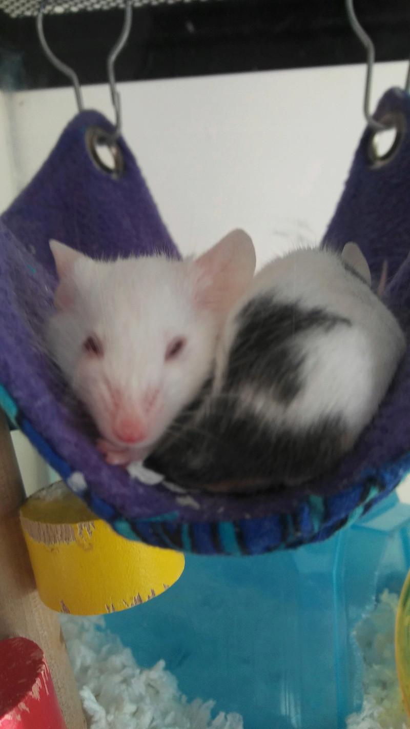 Silly Sleeping Mice 20160813