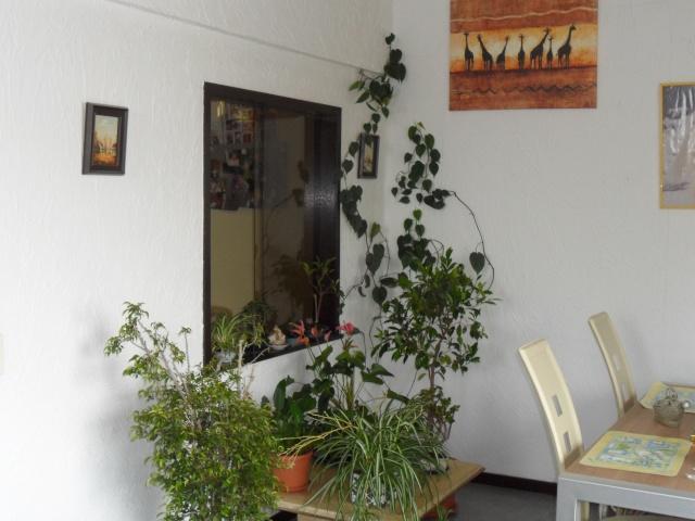 Quelques plantes d'intérieur... Sam_1328