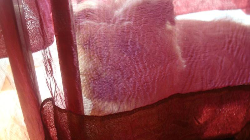 EINSTEIN, cairn mâle fauve - Page 2 Dsc05624