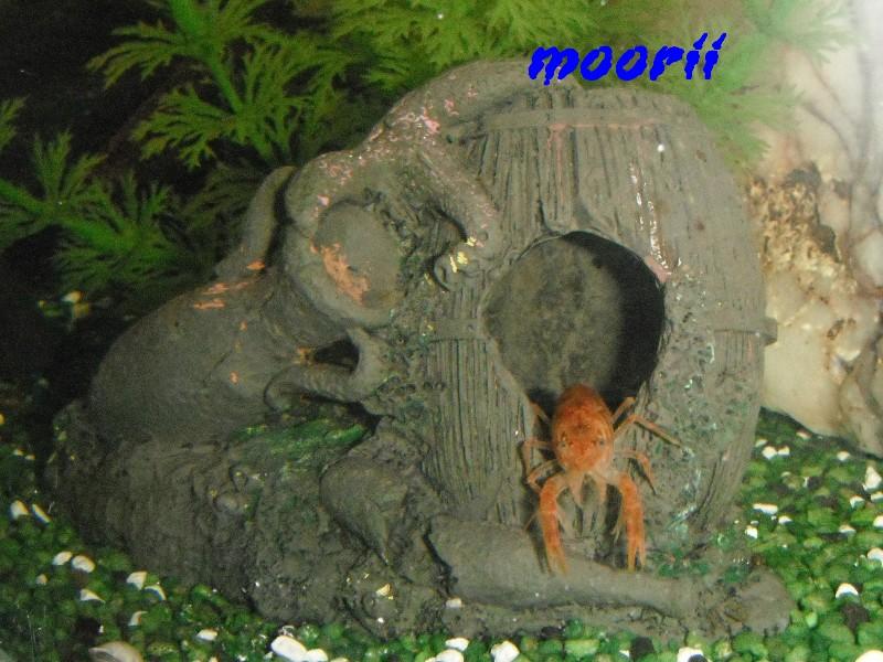 Ce post pour des photos marrantes de vos aquariums 110