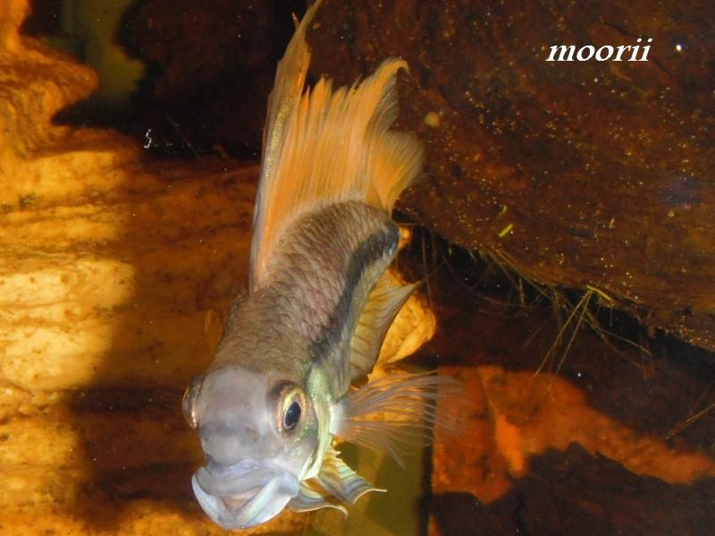 Ce post pour des photos marrantes de vos aquariums 14210