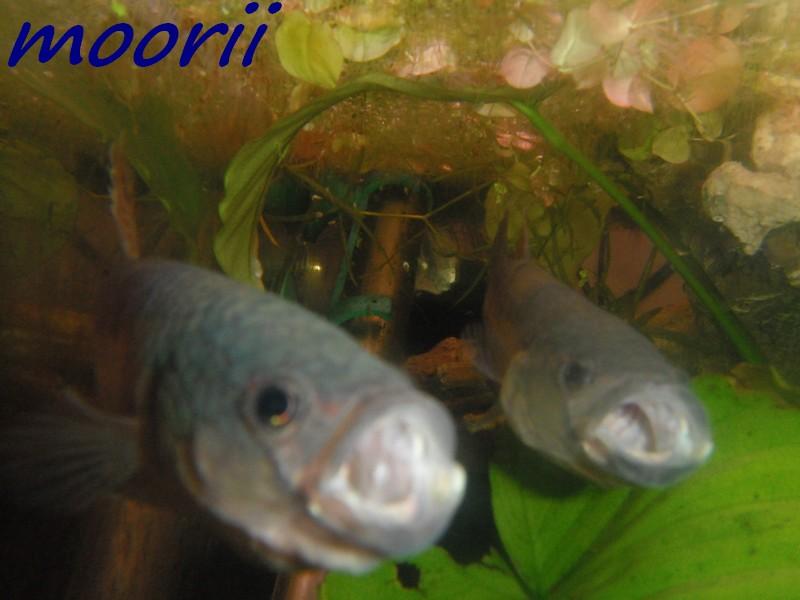 Ce post pour des photos marrantes de vos aquariums 210
