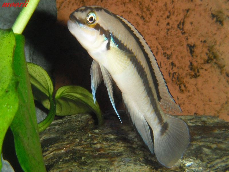 Ce post pour des photos marrantes de vos aquariums Dscf9810