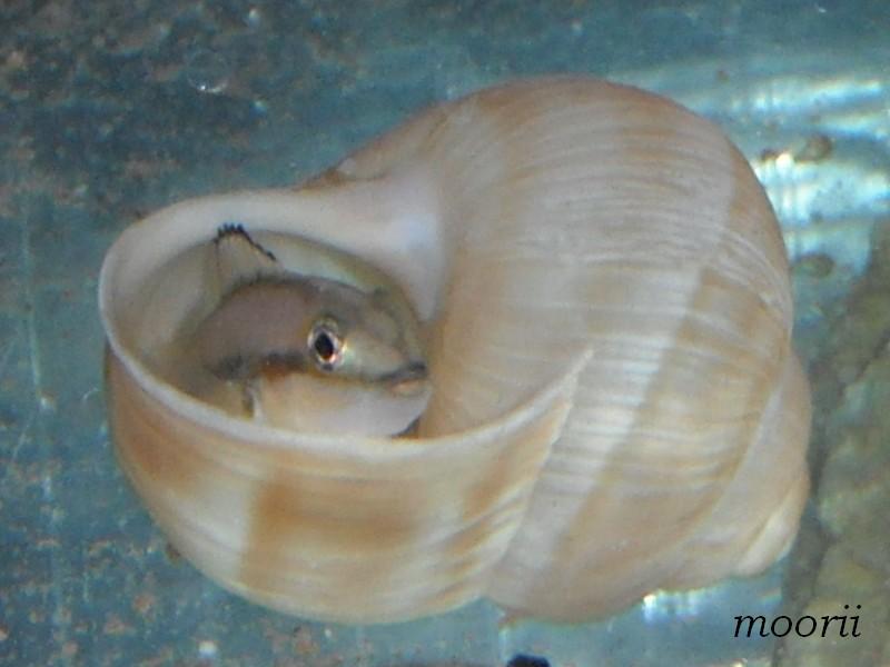 Ce post pour des photos marrantes de vos aquariums Incube10