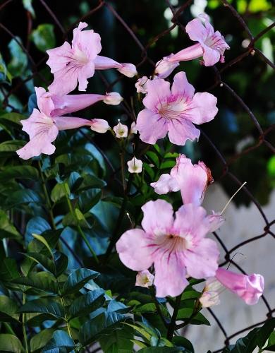 petits bouquets de juillet - Page 2 006_3910