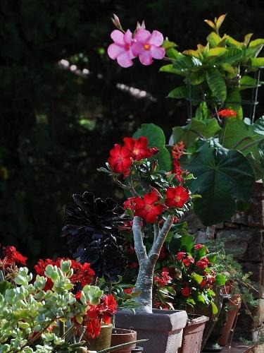 petits bouquets de juillet - Page 2 007_3710