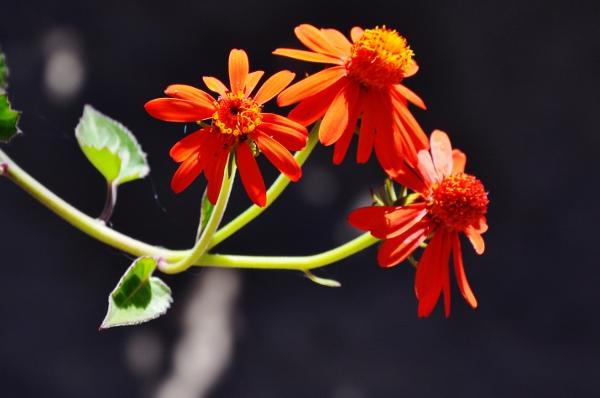 petits bouquets de juillet 018_6011