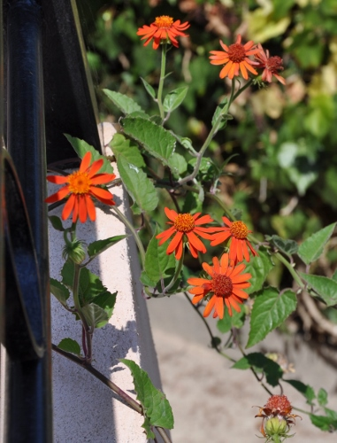 petits bouquets de juillet 036_3810