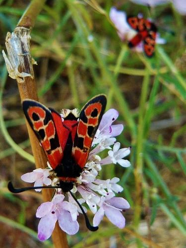 plantes mellifères : les meilleures plantes à insectes de vos jardins  Copie_10