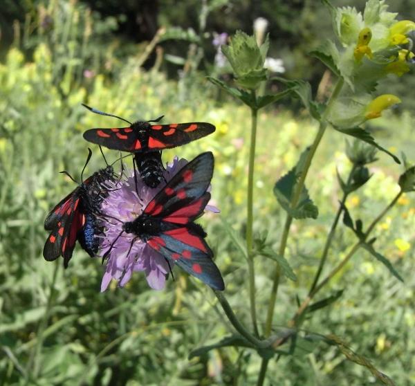 fil(et) à papillons - Page 9 Rimg5413
