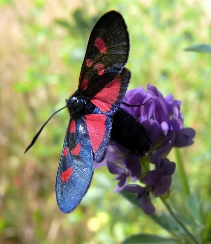 fil(et) à papillons - Page 9 Rimg5414