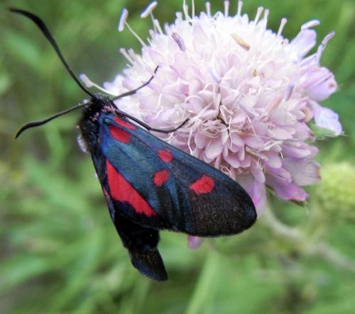 fil(et) à papillons - Page 9 Rimg5415
