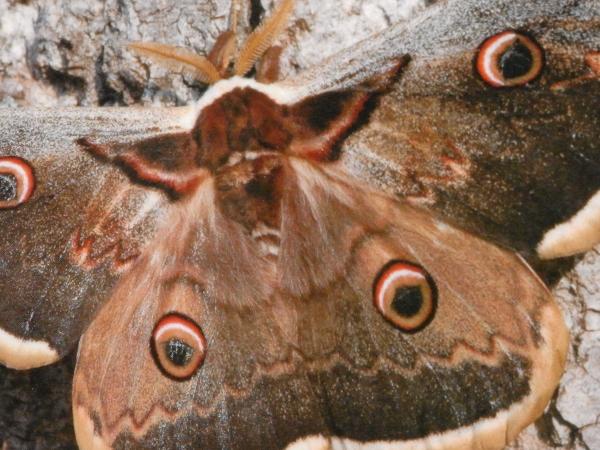 fil(et) à papillons - Page 9 Rimg6110