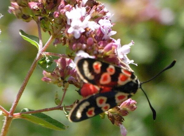 fil(et) à papillons - Page 9 Rimg6111
