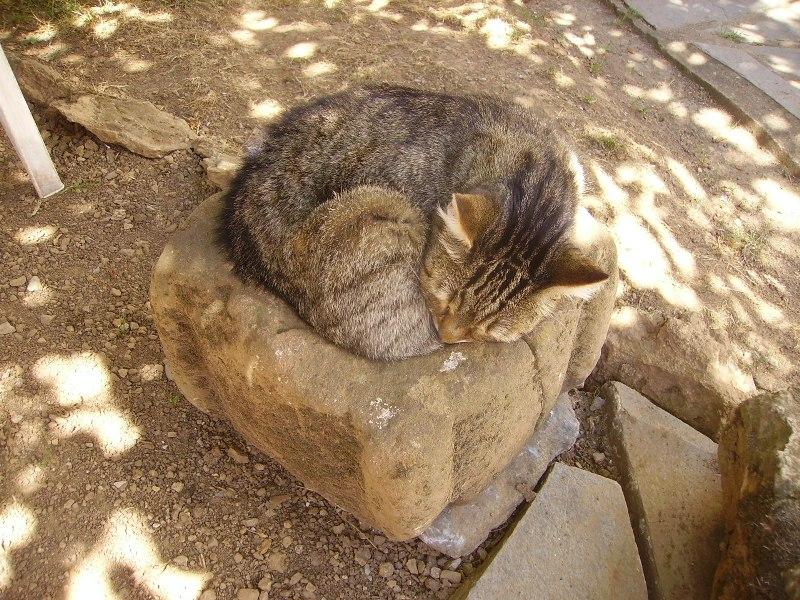 Ce chat me cherche... - Page 5 Loulou13