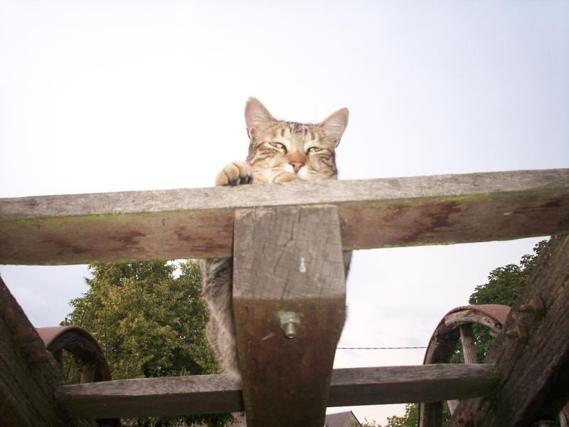 Ce chat me cherche... - Page 8 Loulou16
