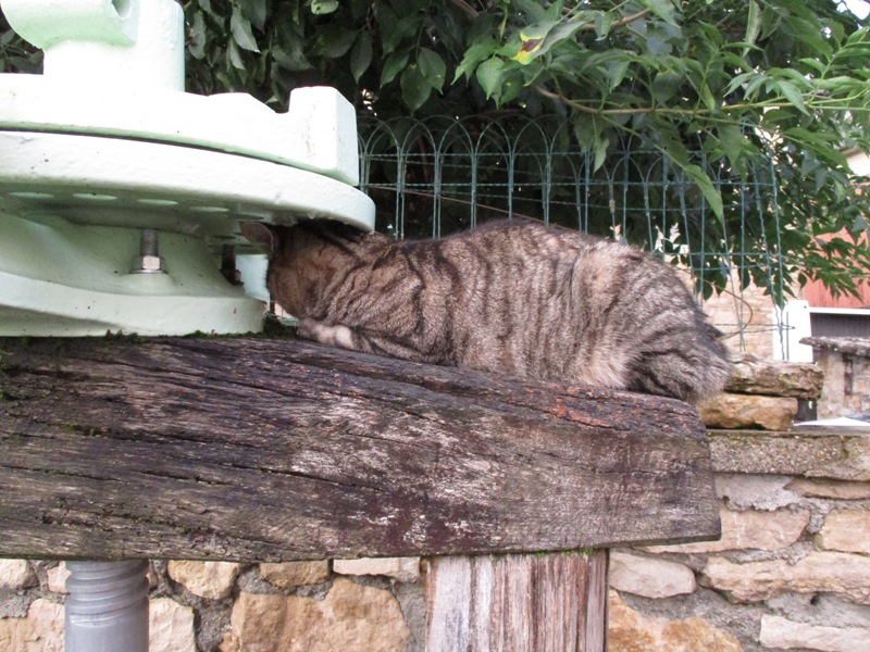 Ce chat me cherche... - Page 8 Loulou17