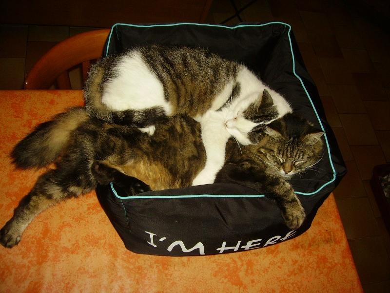 Ce chat me cherche... - Page 6 Riri_e11