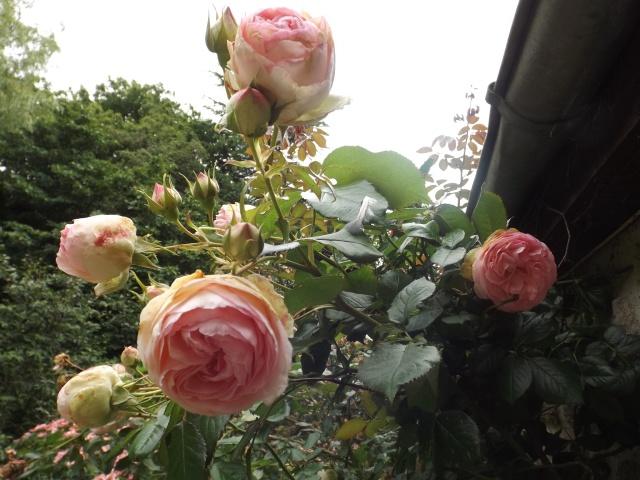 cadeaux du jardin, juin juin - Page 5 Dscf4317