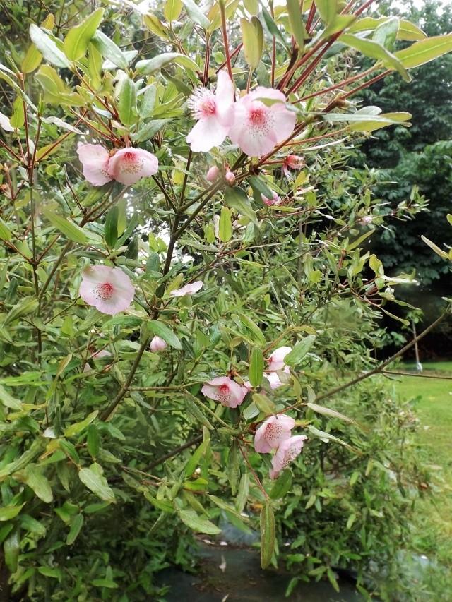 Floraisons du mois de juillet - Page 12 Dscf4324