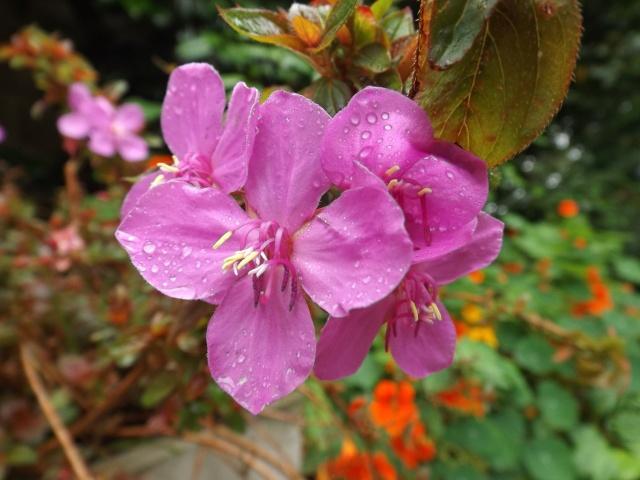 Floraisons du mois de juillet - Page 12 Dscf4328