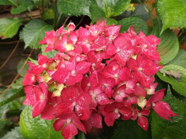petits bouquets de juillet Dscf4340