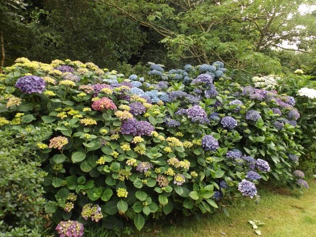 Floraisons du mois de juillet - Page 12 Dscf4343