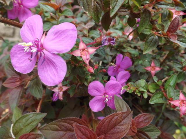 Floraisons du mois d'Août - Page 10 Dscf4442