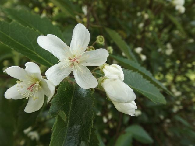 Floraisons du mois d'Août - Page 10 Dscf4447