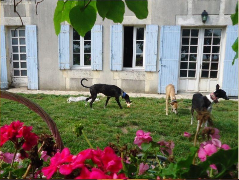 JONATHAN, merveilleux galgo barbu Scooby France  Adopté  - Page 5 Jonath27