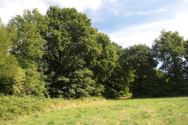L' Aeschne paisible (Boyeria irene) Img_7116