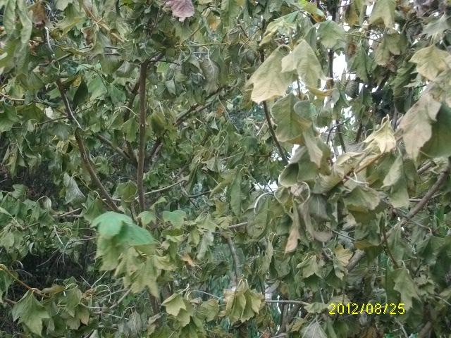 Déjà un petit air d'automne ... Aout_083