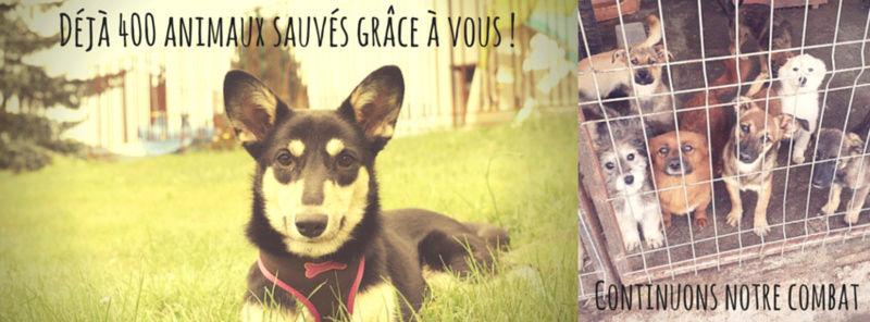 400 chiens et chats déjà sauvés grâce à vous ! Let_s_10