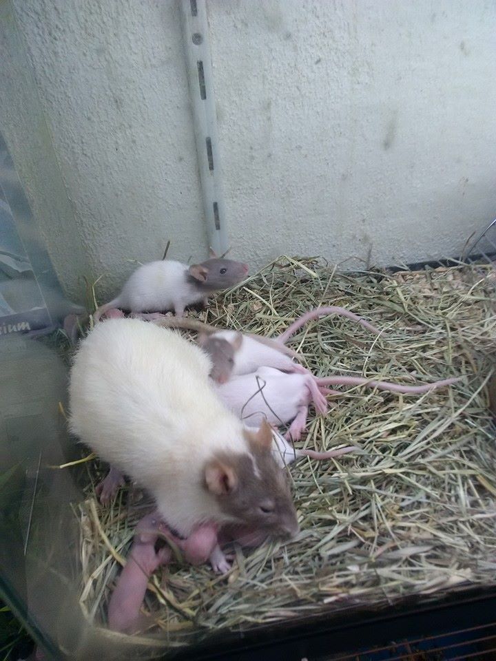 ANIMALERIE SCANDALEUSE  HELP !  13600310