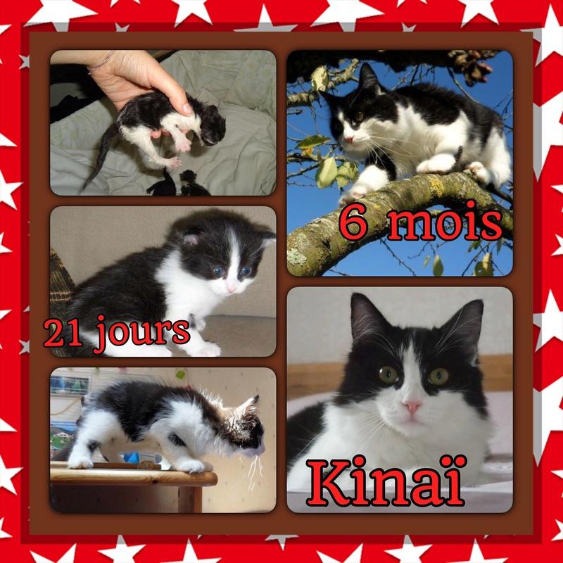 Spécials Photos : Avant/Après de nos chats - Page 15 Kinai10