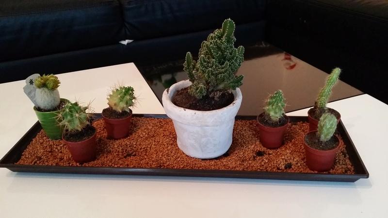 """Cactus""... en fin de vie ? Besoin d'aide svp ! 20160816"