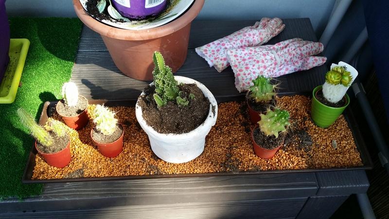 """Cactus""... en fin de vie ? Besoin d'aide svp ! Cactus10"