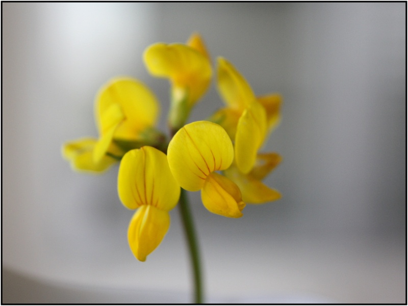 [Fil Ouvert] Fleurs - Page 3 1fleur10