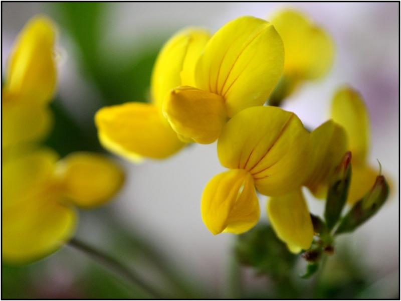 [Fil Ouvert] Fleurs - Page 3 2fleur10