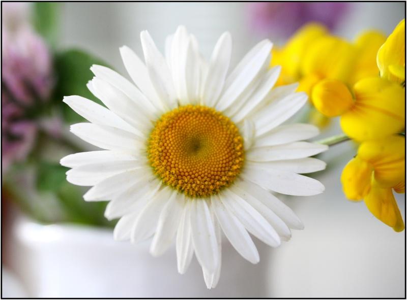 [Fil Ouvert] Fleurs - Page 3 3fleur10