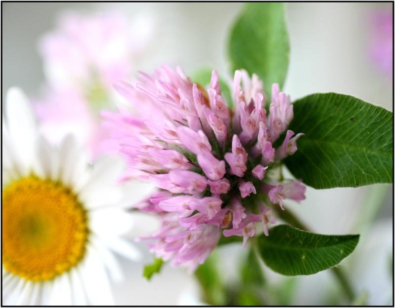 [Fil Ouvert] Fleurs - Page 3 4fleur10