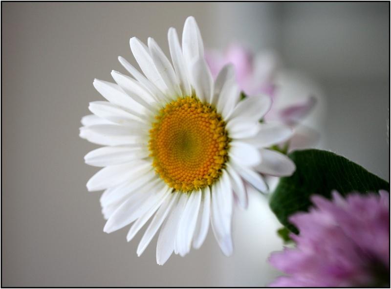 [Fil Ouvert] Fleurs - Page 3 5fleur10