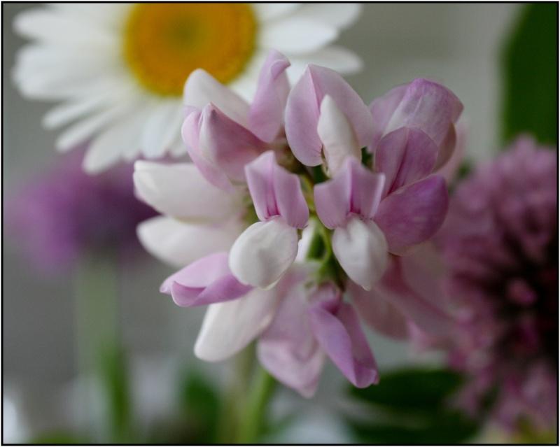 [Fil Ouvert] Fleurs - Page 3 6fleur10