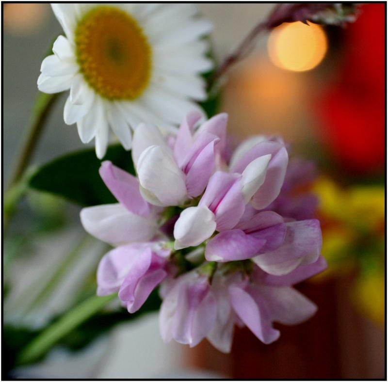 [Fil Ouvert] Fleurs - Page 3 7fleur10