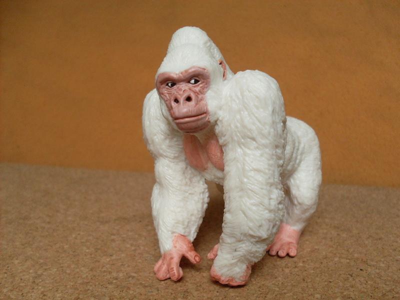 Gorilla albino Albino11