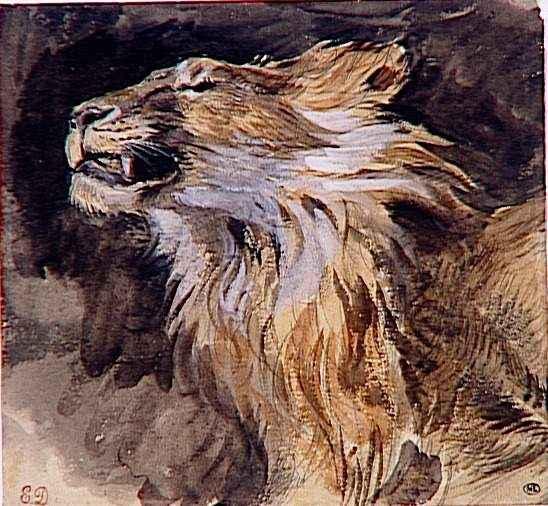 Le LION dans tous ses états 1_1_1249