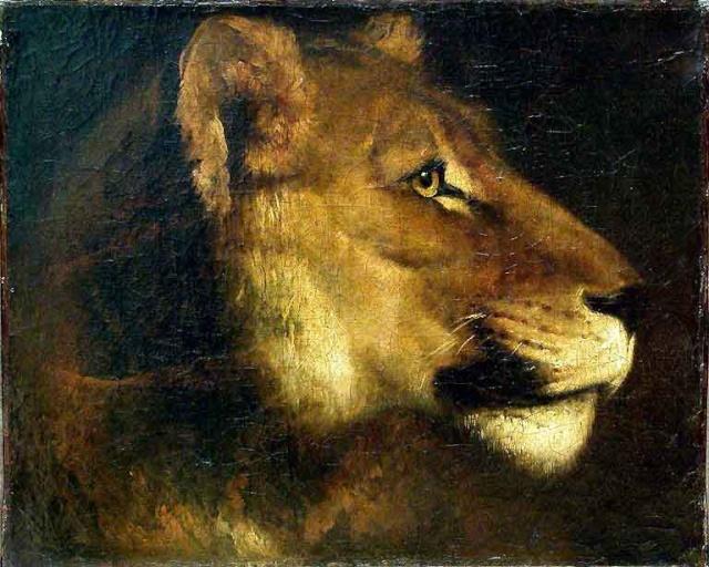 Le LION dans tous ses états 1_1_1461