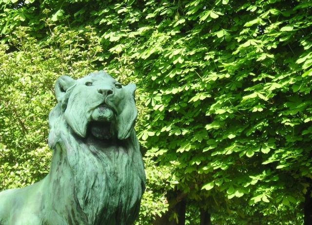 Le LION dans tous ses états 1_1_1531